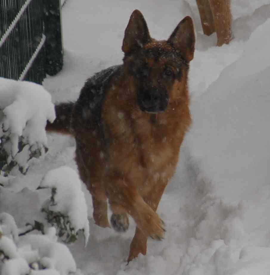 Hundeschule K9Unit Düren Hundetrainer